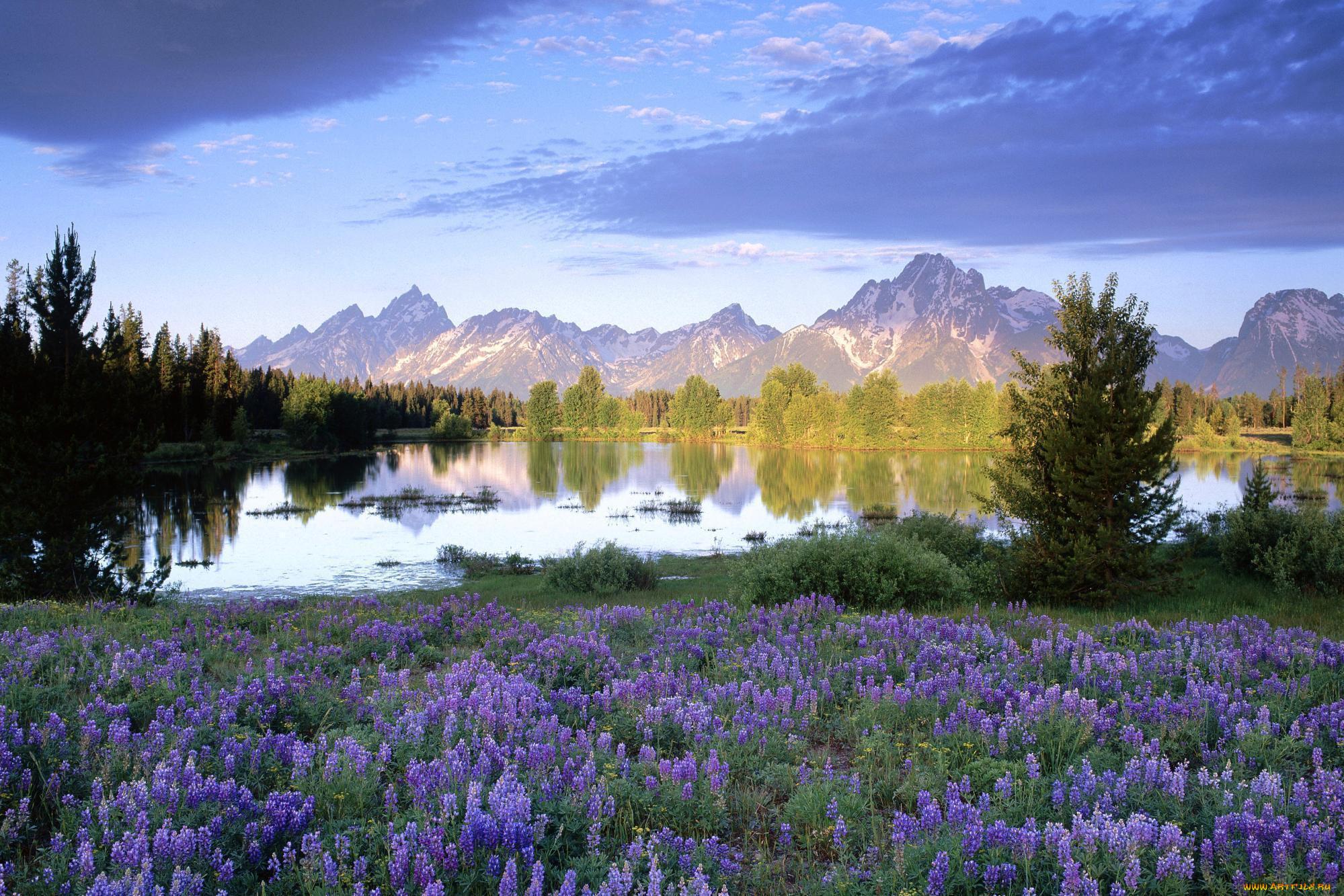 обои самые красивые фото природа весной основное его назначение